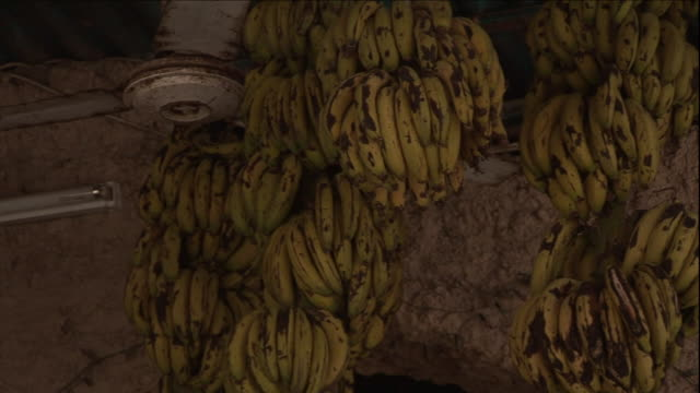bunches of ripe bananas hang from the ceiling of a produce market. - ripe stock videos & royalty-free footage