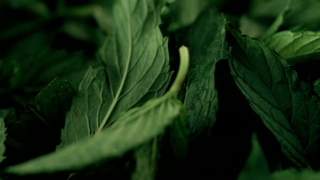 bundle of fresh mint - mint leaf culinary stock videos and b-roll footage