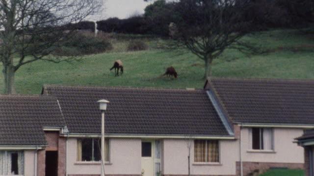 1983 pan bungalows for elderly on quiet semi-rural street with wild exmoor ponies grazing in yard / porlock, somerset, england - ポーロック点の映像素材/bロール