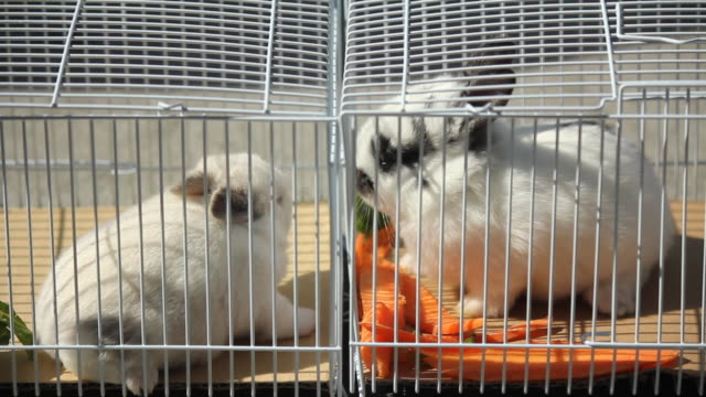 vidéos et rushes de 2 bunnies being cute in a cage - animaux en captivité