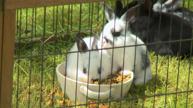 vídeos de stock, filmes e b-roll de bunnies eating from bowl - cottontail