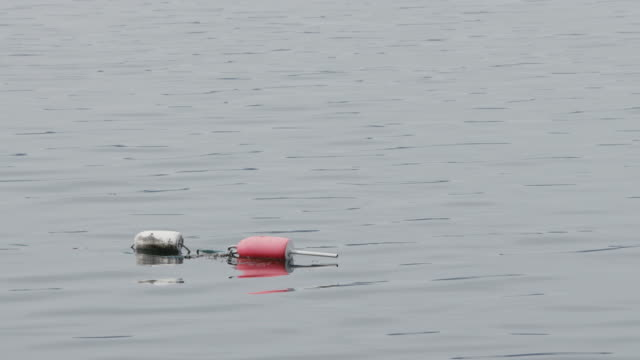 Buoy floating in Maine bay