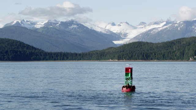 Buoy floating in ocean with sea lions sleeping on it