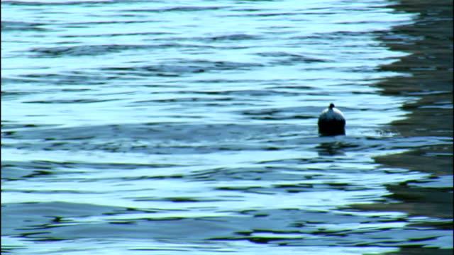 vídeos de stock, filmes e b-roll de a buoy floats on rippling water. - boia equipamento marítimo de segurança