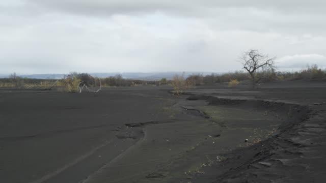 buried tree on windy ash plain, alaska, 2009 - ash tree stock videos & royalty-free footage