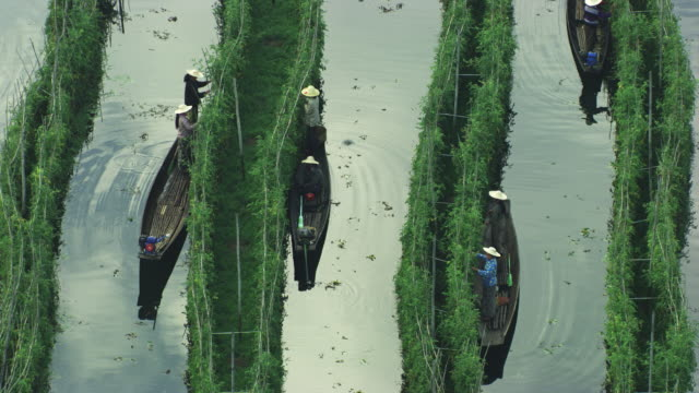 Burma-Myanmar : Close-up of the harvest from the canoe