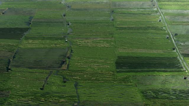 burma-myanmar : fields in marshes - myanmar video stock e b–roll