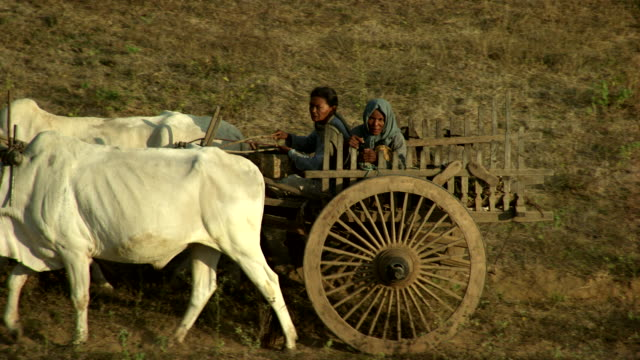 Burma-Myanmar : Oxen pulling a trailer