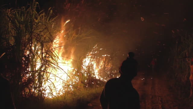 Burn sugar cane in Veracruz