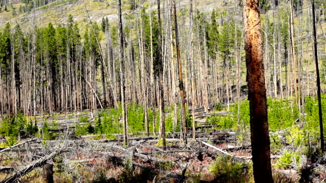 burned forest - reforestation stock videos and b-roll footage