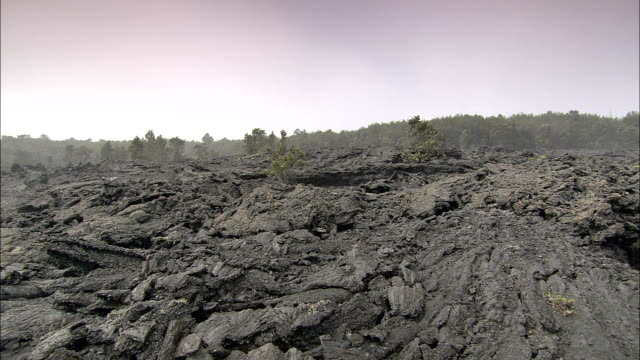 burned plants, ash, and debris cover a lava path near a forest. - ash stock videos & royalty-free footage