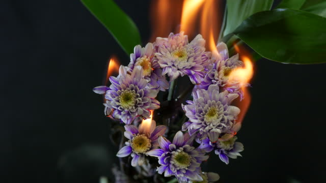 burning chrysanthemum - burning stock videos & royalty-free footage