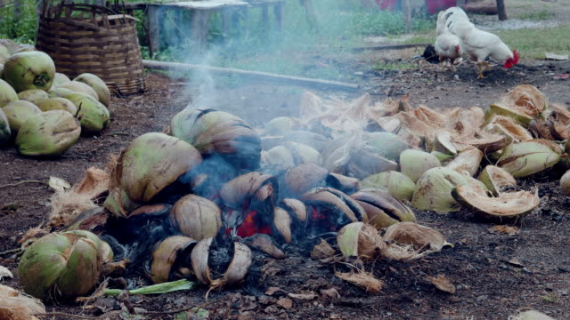 burning coconut - roasted stock videos & royalty-free footage