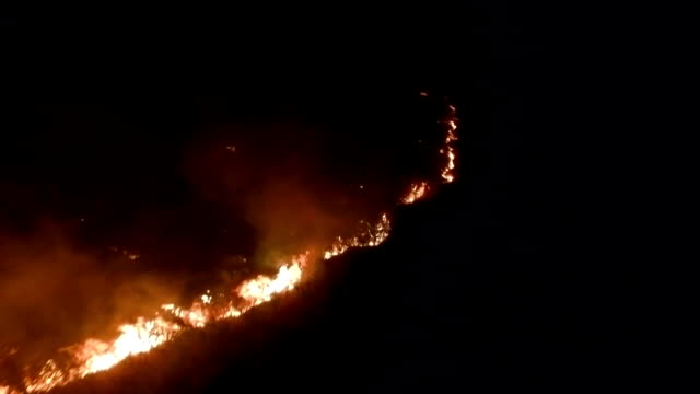 burning dry grass in the night field - terra brulla video stock e b–roll