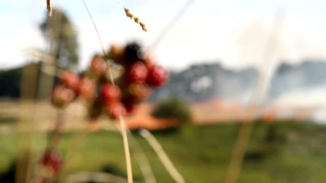 burning farm - burnt stock videos & royalty-free footage