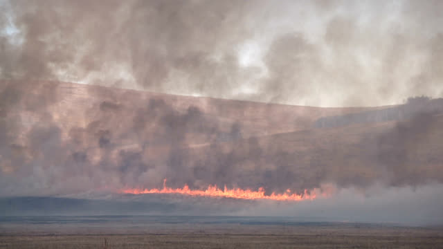 Burning field in Steppe