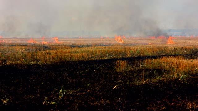 Burning field of dry grass