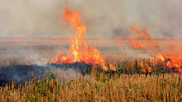 Burning field of dry grass