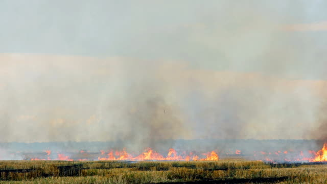 burning field of dry grass - stubble stock videos & royalty-free footage