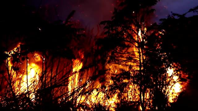 夜の薪の暖炉 - 可燃性点の映像素材/bロール