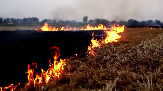 burning fire in the field - crop stock videos & royalty-free footage