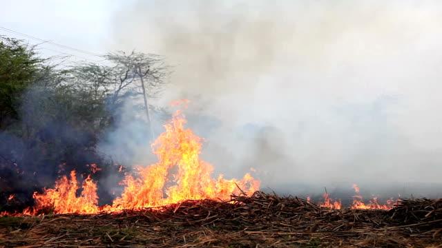 bruciare il fuoco di campo - incendio video stock e b–roll