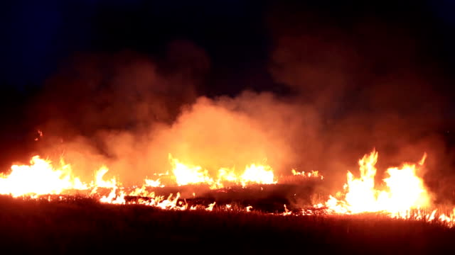 stockvideo's en b-roll-footage met brandende vuur - gras