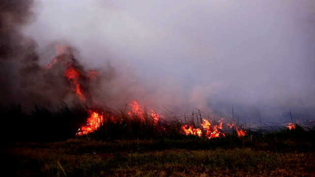 burning fire - incendio video stock e b–roll