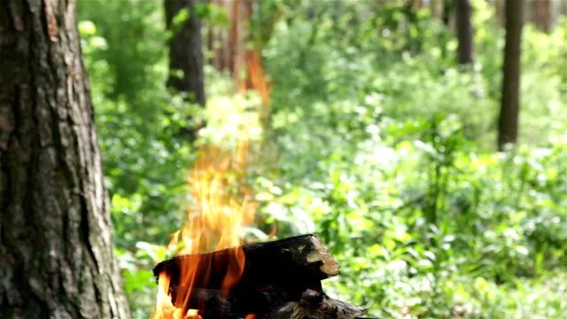 brennen brennholz zum kochen essen auf holzkohle. - brennbar stock-videos und b-roll-filmmaterial