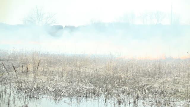 burning 芝生、湿地エリアで気分が引き起こした大惨事 - 全壊点の映像素材/bロール