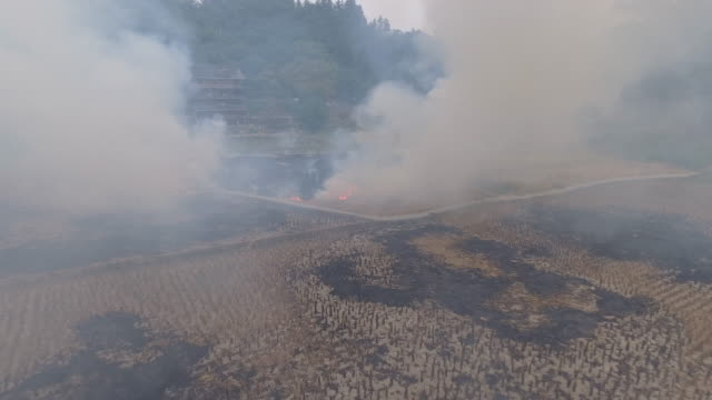 Burning stubbles on the fields after harvest