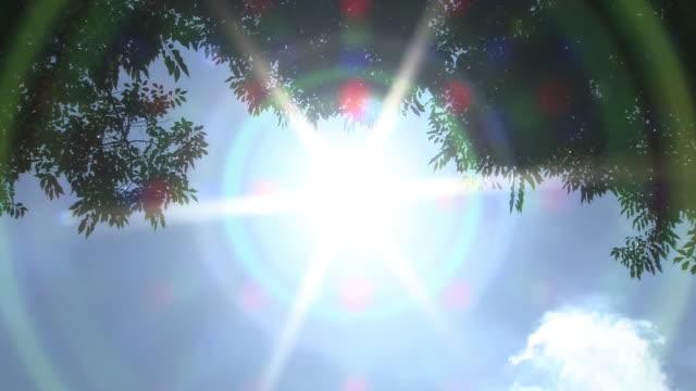 burning sun beyond tree leaves, saitama, japan - 夏点の映像素材/bロール