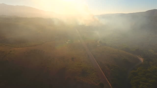 Burning Trees. Crete, Greece. Road in the mountains. Aerial drone shot.