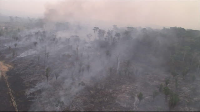 burning trees  wide shot  aerial shot - amazon region stock videos & royalty-free footage