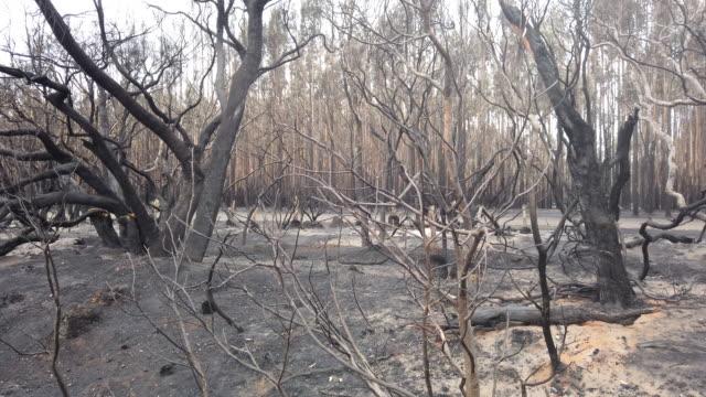 burnt bushland is seen at the edge of the playford highway west of parndana on january 10, 2020 on kangaroo island, australia. over 100,000 sheep... - bush stock videos & royalty-free footage