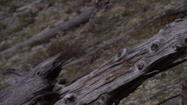 burnt, dead wood litters a hillside. - burnt stock videos & royalty-free footage