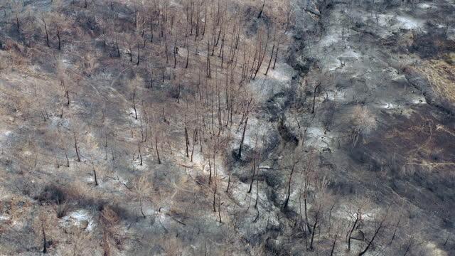 vídeos y material grabado en eventos de stock de bosque quemado - pinar