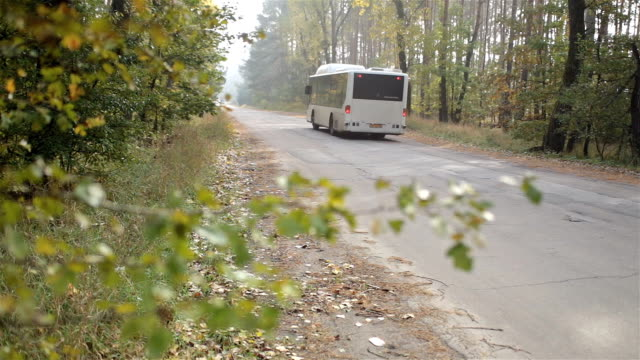 Bus drives on the road in the autumn forest.
