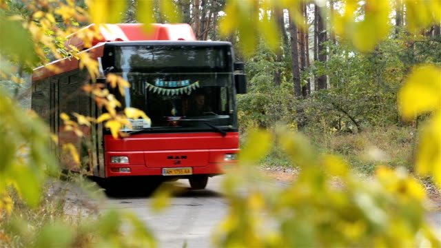 bus drives on the road in the autumn forest. - autobus video stock e b–roll