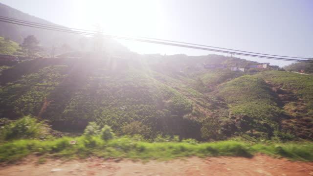 vidéos et rushes de bus point of view of a tea plantation at nuwara elyia, sri lanka - thé noir