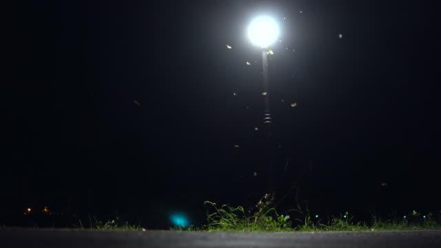 stockvideo's en b-roll-footage met bushalte 's nachts. geschoten op horror cinema - elektrische lamp