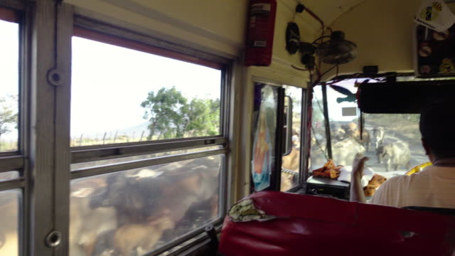 bus stops because of cows herd at latin america - nicaragua stock videos and b-roll footage