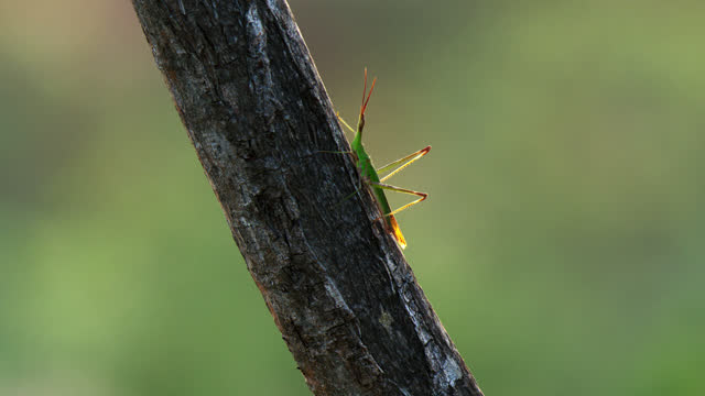 bush cricket insect on the sloping wood - cricket stump stock videos & royalty-free footage