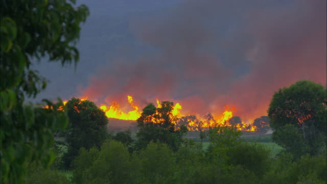 ws, bush fire blazing on horizon, australia - drought stock videos & royalty-free footage