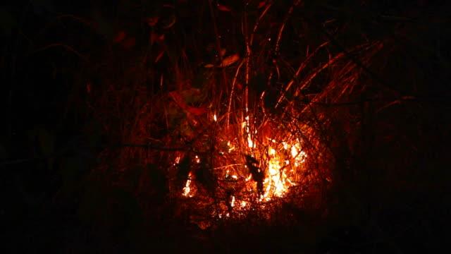 Buschfeuer auf dem Berg im Sommer in Thailand