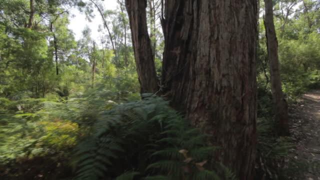 bush glide - tropiskt träd bildbanksvideor och videomaterial från bakom kulisserna