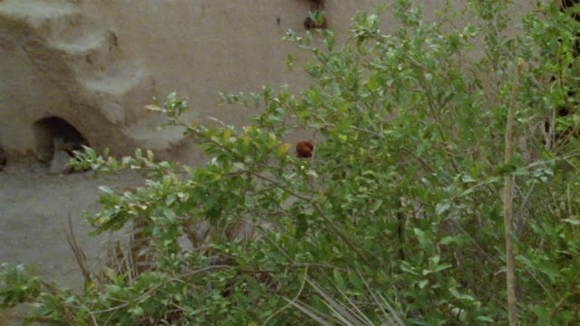 cu tu bush growing near steps outside middle eastern dwelling / iran - see other clips from this shoot 1007 stock videos & royalty-free footage