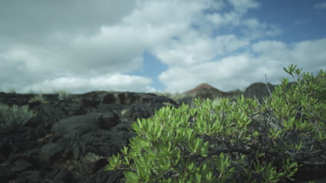 bush in foreground, igneous rock, sky, clouds, el hierro, canary islands, november 2011 - igneous stock videos & royalty-free footage