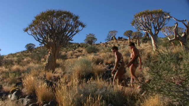 stockvideo's en b-roll-footage met bush people in quiver tree forest - namibië