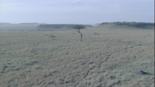 Bushes and acacia trees dot the Maasai Mara in Kenya. Available in HD.